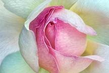Pretty Pastels / soft tones / by Tuftex Carpets of California