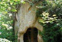 In the Trees / by Judy Aldridge