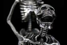 Bones / by o0shom0o ...