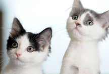 Cute! / Kittens, puppies and cute animal stories from WalesOnline  / by WalesOnline