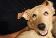 dog smiles / by We Love Westies