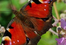 Butterfly kisses / by Kathy Moncrief