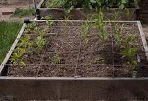 Green thumb Gardening / by Walt Sorensen