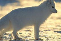 Save the Arctic / Suiver, poster, ré-épingler vos images et vidéo en rapport avec la campagne de Greenpeace  #SaveTheArctic #Greenpeace #savethearctic, save the arctic / by Laurence Croze