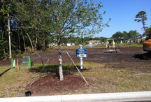 New Home  Sales Myrtle Beach  / Building new homes in Myrtle Beach at Cipriana Park in the Grande Dunes community has been very busy this summer. These recently purchased lots have been cleared and graded to begin construction of new homes.  / by Cipriana Park