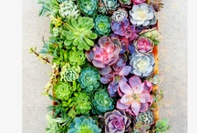 home and garden / by Shanna Politte
