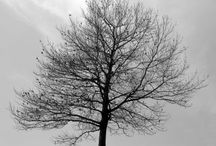 Trees / by ned kelly