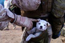 Puppy Love / by Lisa Dye