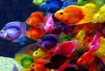 Sea Life / by karen gulleman