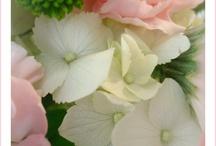 My English Garden - dreaming! / by Meg Luff
