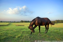 Thoroughbreds / by Erika Canter