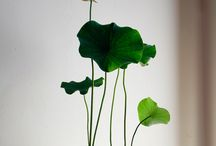 Plants / Greenery / by Francois Aubret