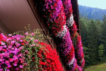 Window boxes and gardens / by Gina Duncan