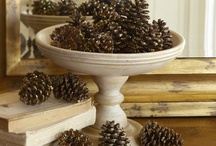 A Plethora of Pinecones / by Cindy Harvey