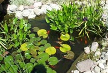 Water features / Water gardens, fountains, ponds and waterfalls / by Jane Gates