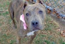 Rescue A Pet Today / Rescue, Foster, Or Adopt A Pet, Save A Life! / by James Bustamante