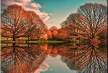 Reflections / by Laura Houck Enkowitz