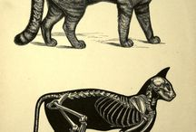 <3 ANIMALS / by Sara Pazos