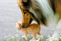 Shelties and Friends / by Lisa Goldapp