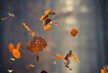 autunno / by Alessia Rissetto