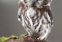 OWLS / by Trixie Crownover