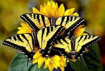 <3 Butterflies <3 / by Jennifer Rico