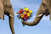 Elephants / by Tonya Toney