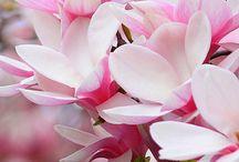 Flowers  / by Cora Van de Vlekkert