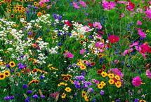 Gardening / by Jeri Reimer