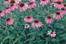 flower gardens / by Brenda Webb
