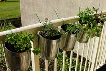 Green Thumb / Gardening / by Jill Cappaert