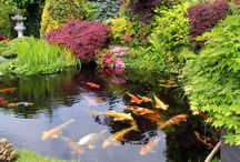 Water Gardens / by Southern Living Plant Collection