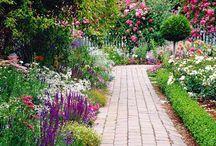 garden. / by Emily Tesh