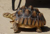 Tortoises / by Steven Farmer