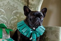 French Bulldog / by Lo Charme