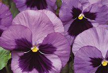 Flowers / by Karen Kubovchick