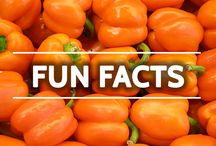 Fun Facts / by NutriBullet