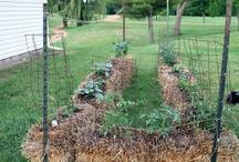 gardening / by Amy Cornwell, LLC