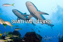 bucket list. / before i die. / by Stephanie Stivers