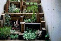 Gardening #2 / by Maryia Webb