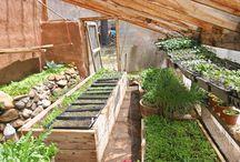 Gardening / by Amy Castro