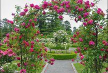 Garden & Flowers / by Dana Weg