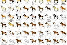 Horses / by Joy Neveils