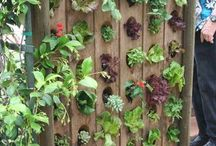 Greenthumb / Gardening ideas for broke young people with limited space.  Lots of eco-friendly ideas! / by Ingrid Røwland