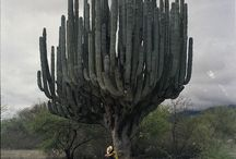 Cacti and Succulants / by Stephen