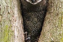 Owls / by Mary Ayer-Couger