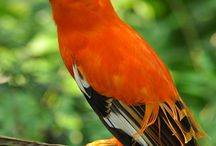 Otmane EL RHAZI - Birds / Otmane EL RHAZI - Birds / by Otmane EL RHAZI