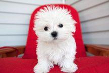 Pet Pantry / by Shannon Reiswig - MuttsandMittens