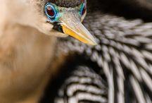 Life List of Birds / by Brenda Shoemaker Bricker