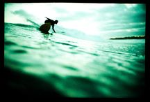 Lomographs / by Lomography Asia